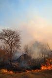 Incendie de forêt sauvage Images libres de droits