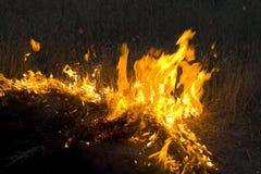 Incendie en steppe Photos libres de droits