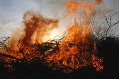 Incendie et arbres de forêt Photographie stock