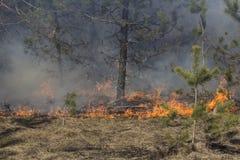 Incendie et soleil de forêt Images libres de droits