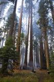 Incendie modéré en stationnement national de séquoia Photographie stock libre de droits