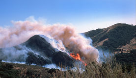 Incendie sauvage Image stock