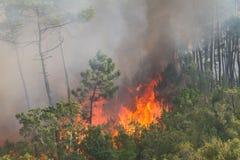 Incendie sauvage de forêt Photo stock