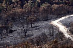 Incendie sauvage de forêt Image stock