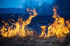 Incendie sur l'herbe sèche et les arbres Images libres de droits