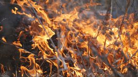 Incendies de forêt L'incendie détruit l'herbe sèche et arrive à la forêt clips vidéos