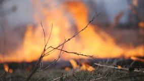 Incendies de for?t L'incendie d?truit l'herbe s?che et arrive ? la for?t clips vidéos