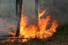 Incendio forestal Fotos de archivo