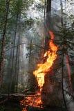 Incendio forestal Foto de archivo