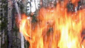 Incendio forestal. metrajes