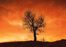 Incendio forestal Imagen de archivo libre de regalías