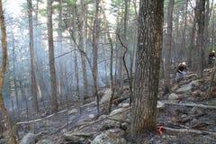 Incendio forestal Imagenes de archivo