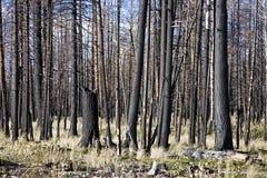 Incendio forestal (AO) imagen de archivo