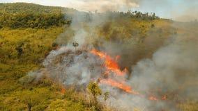 Incendio forestal de la visión aérea Busuanga, Palawan, Filipinas almacen de metraje de vídeo