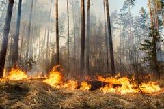 Incendio forestal en curso imagenes de archivo