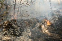 Incendio forestal en el verano Fotografía de archivo libre de regalías