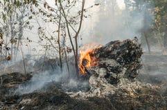 Incendio forestal en el verano Fotos de archivo