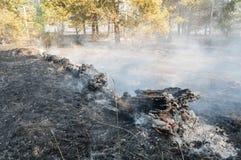 Incendio forestal en el verano Imagen de archivo