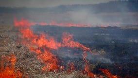 incendio forestal en naturaleza metrajes
