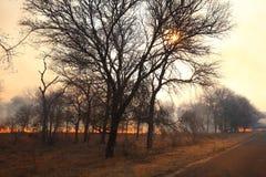 Incendio forestal salvaje Imagen de archivo libre de regalías