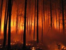 Incendio forestale fotografia stock
