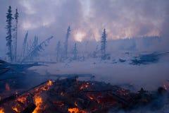 Incendio forestale Immagini Stock Libere da Diritti