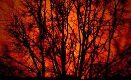Incendio forestale Fotografia Stock Libera da Diritti