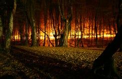 Incendio forestale immagini stock