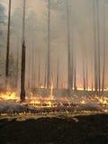 Incendio forestale Fotografie Stock Libere da Diritti