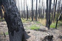 Incendio forestale (ANNUNCIO) fotografia stock