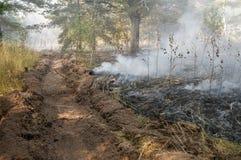 Incendio forestale di estate immagini stock