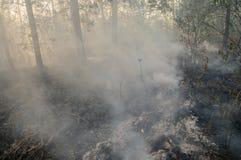 Incendio forestale di estate immagine stock