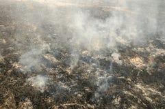 Incendio forestale di estate fotografia stock