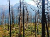 incendio forestale di 4k Rocky Mountain con i fiori di estate e di lago Immagini Stock Libere da Diritti