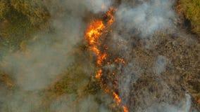 Incendio forestale di vista aerea Busuanga, Palawan, Filippine immagini stock