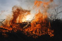 Incendio forestale ed alberi Fotografia Stock