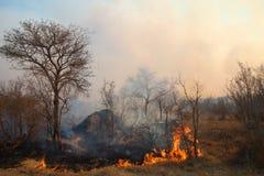 Incendio forestale selvaggio Fotografie Stock