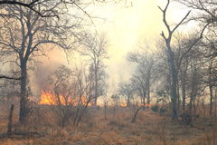Incendio forestale selvaggio Immagini Stock