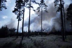 Incendio forestale selvaggio immagine stock