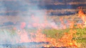 Incendio fuera de control al aire libre intenso en el campo almacen de metraje de vídeo