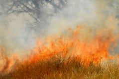 Incendio violento Immagini Stock Libere da Diritti