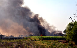 Incendio violento bruciato della canna vicino alla strada Immagini Stock