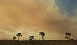 Incendio violento California di Alamo del fumo fotografia stock