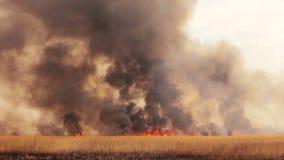 Incendio violento nei campi stock footage