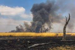 Incendio violento nel campo con erba asciutta con un albero bruciato Fotografia Stock Libera da Diritti