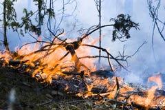 Incendio violento nella foresta Fotografia Stock Libera da Diritti