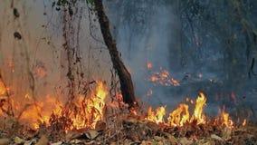 Incendio violento sulla montagna dell'audio della Tailandia registrata archivi video
