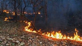 incendio violento sulla montagna della Tailandia stock footage