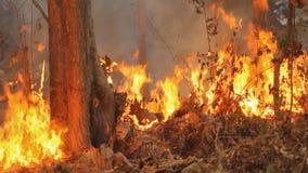 Incendio violento sulla montagna della Tailandia, ciclaggio senza cuciture stock footage