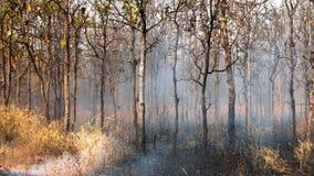 Incendios forestales Imagen de archivo libre de regalías